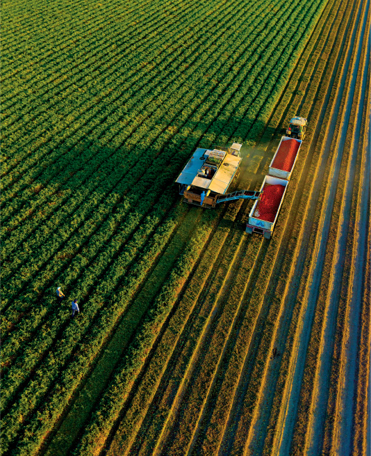 California's Central Valley, Land of a Billion Vegetables - NYTimes.com